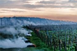 Burgundy-frost-2016-630x417